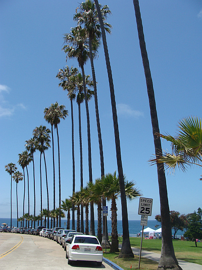 Sun, sea, beach and palm trees. The American Dream fully came true