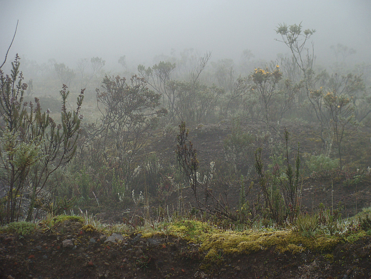 Wild vegetation on the lower Cotopaxi slopes
