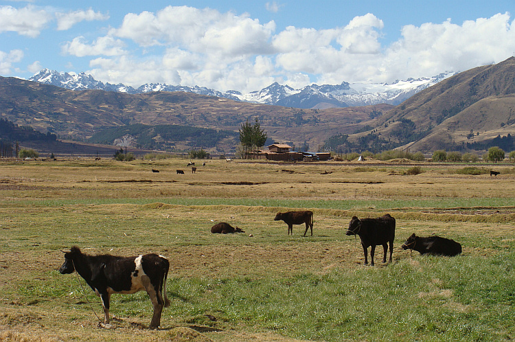 Landscape between Anta and Cusco