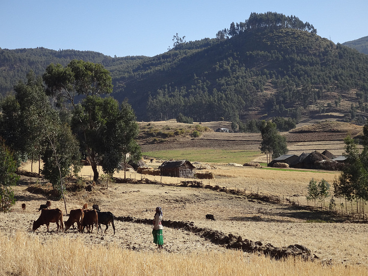 Landscape in Central Ethiopia