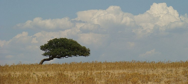 Lonely tree, Sardegna