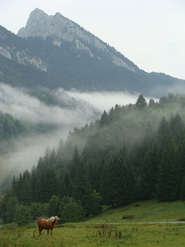 Misty Mountain Top, Chartreuse