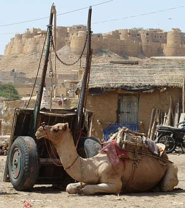 Camel against the backdrop of the city of Jaisalmer
