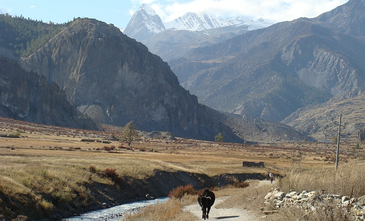 The valley of the Marsyangdi, on the way to Manang