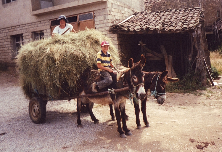 The donkey and the mule are still major transport modes in these parts of portugal